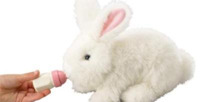 חיות מחמד צעצוע